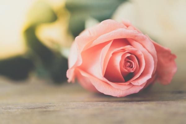 Einzelnen rosa Rose liegt auf einem Holzboden
