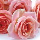 Rosen auf dem Boden liegend